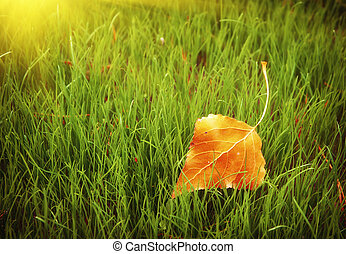 First autumn leaf. Nature composition.