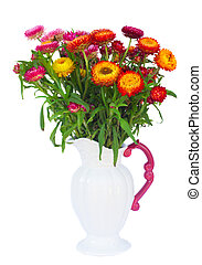 Everlasting flowers - fresh Everlasting flowers bouquet in...