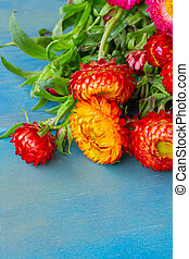 Bouquet of Everlasting flowers bouquet  on blue wooden table