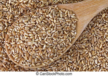 Grains - Wheat Berries - A wooden spoon full of grains -...