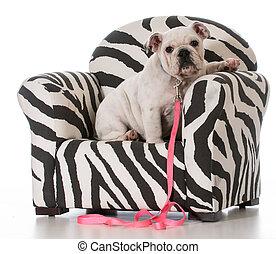 puppy sitting in chair