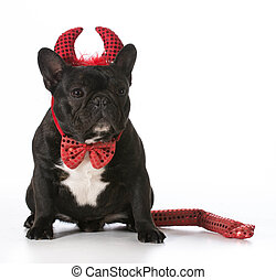 naughty dog - french bulldog wearing devil costume