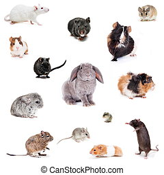 Set different spieces of rodents - Set of Different spieces...