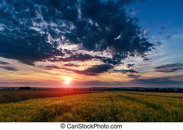 Summer sunset over a field
