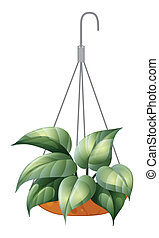 A hanging green plant