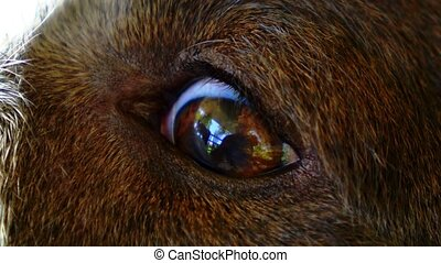 Beautiful Eye of a Cute Dog. Close up. Macro. Reflection of...