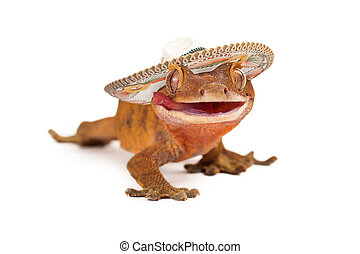 Funny crested gecko wearing sombrero - A funny crested gecko...
