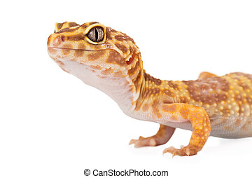 Leopard Gecko Side View Cropped - A cropped view of a yellow...
