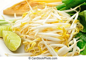 Mung beans or bean sprouts on white plates - Mung beans or...