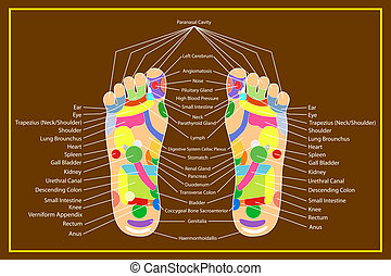 Acupuncture - scheme of foot Traditional alternative heal,...