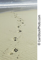Footprints in beach wave - Beach with footprints on the...