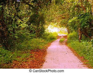 Estrada - Caminho com destino a uma aldeia ind?gena.