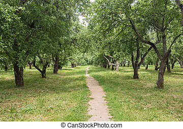 narrow path - summer landscape in the park with a footpath