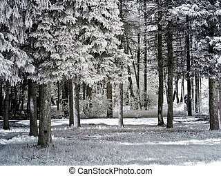 Forest. Infrared photo - Foliage and trees. Photo in the...