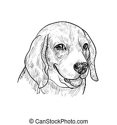 Beagle - Portrait of adorable beagle on white background