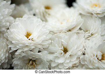 Fine art of close-up , flowers - Fine art of close-up,...