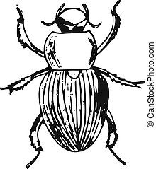 beetle - hand-made illustration of a series of insects,...