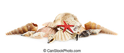Pile of seashells isolated over the white background