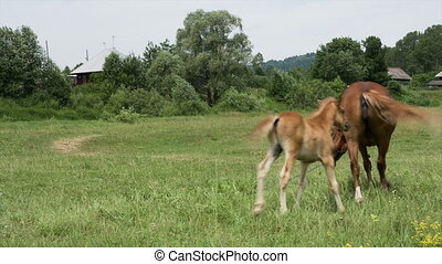 Mare and foal grazing in a meadow