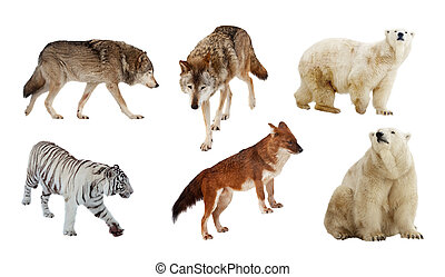 Carnivora mammals Isolated over white - Set of Carnivora...