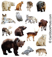 Set of european animals Isolated over white background with...