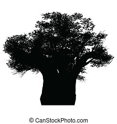 african baobab - this an african baobab tree silhouette....
