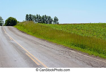 Country Road with Cornfield
