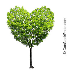 Heart shape tree isolated over white background - Love and...