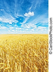 Golden wheat field and beautiful sky