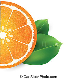 vector illustration with orange