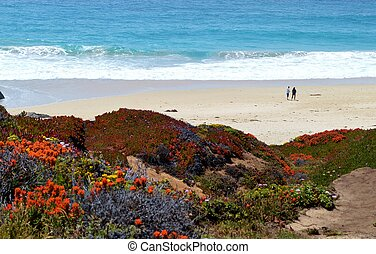 California Beach - Coastline in California