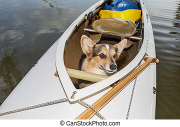 canoe dog - Corgi dog in a decked expedition canoe on a lake...