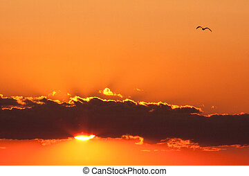 Bird Flying through Sunset - Bird flying through sunset in...