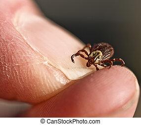 Tick - Live tick on a human thumbnail