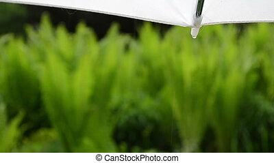 water drop umbrella rain - Closeup of umbrella corner and...
