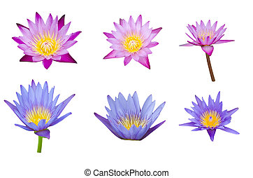 lotus set - lotus on the white background Set of various...