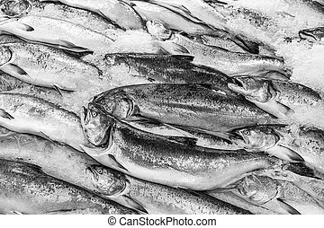 Salmon On Ice - A display of fresh king salmon on ice in a...