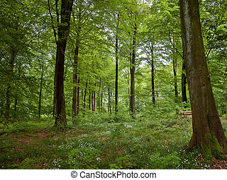 Beautiful Forest landscape nature background - Deep in the...