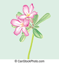 Vector Watercolor Painting of Impal - illustration of flower...