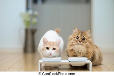 貓, 夫婦, 碗, 食物, 地板