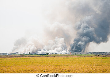 Waste Incineration