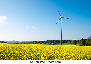 Blue sky, rapeseed and windwheel - Blue sky, yellow rapeseed...
