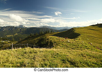 grazing land in the german alps mountains
