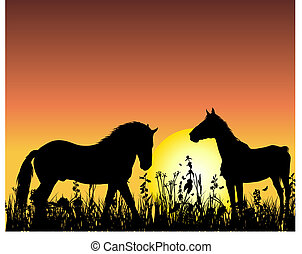 horse on sunset background
