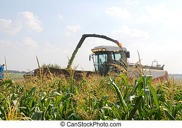 harvester reaps a crop of corn