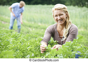Couple Working In Field On Organic Farm