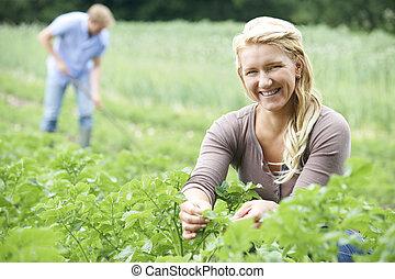 pareja, trabajando, en, campo, en, orgánico, granja