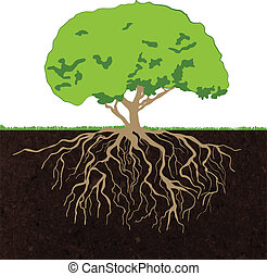 Tree roots sketch - Decorative deciduous established forest...