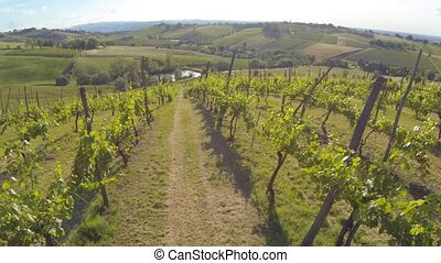 flying over a vineyard aerial - flying slow over a vineyard...