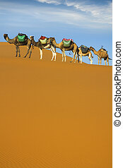 Desert caravan - Camel caravan moving in Sahara desert in...